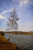au bord du lac (.Sophie C.) Tags: lake tree lac 02 arbre picardie bouleau aisne chamouille lacdailette