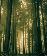 Magic forest (roland_lehnhardt) Tags: wood fairytale forest landscape quiet outdoor magic natur silence mystik landschaft wald bume einsamkeit stille nuture ruhe wildnis naturemasterclass teiltonung