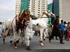 Celebrating Pakistan Day (Amna Yaseen) Tags: pakistan parade lahore 2015 23march pakistanday