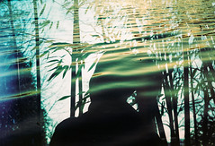 Eastern Shade (Hayden_Williams) Tags: shadow film nature water girl silhouette female analog outside xpro crossprocessed pond outdoor doubleexposure ripple bamboo multipleexposure fd50mmf18 figure serene analogue canonae1 current agfaprecisact100