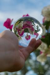 Boule cristal Bougainvillier, polynésie (Eliette S) Tags: fleur ball nikon tahiti cristal boule d610 polynésie bougainvillier