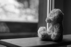 waiting (andreas.klodt) Tags: bear bw teddy sw weiss schwarz br teddybr