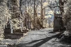 Nunhead Cemetery (blackwoodse6) Tags: uk trees england london cemetery graveyard ir nikon infrared southlondon southwark nunhead southeastlondon nunheadcemetery se15 infraredphotography 720nm nikond300 lonndoncemeteries