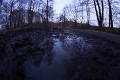 Dirty mind (maria_maeusels) Tags: trees distortion reflection nature water puddle evening abend wasser hessen angle mud wide 8 dirty fisheye dirt mm 8mm spiegelung fulda rhön dreck schlamm froschperspektive weitwinkel pfütze objektiv verzerrung ehrenberg lowangleshot
