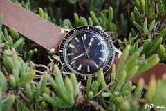 Prim Sport in the garden (FLO_mac ) Tags: sport vintage czech diver prim