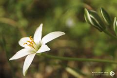 Spring (filippi antonio) Tags: flowers macro primavera nature closeup spring natura fiori primopiano