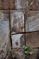Badgastein (Harald Reichmann) Tags: salzburg kunst linie blatt arbeit baum muster badgastein werk versuch erdbeere zeichnung geometrie stamm bearbeitung schnitt holzbringung motorsge abschnitt mglichkeit einschnitt wasserfallweg allesistkunst