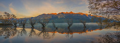 Guardians Of Glenorchy - Panorama (Arief Rasa) Tags: trees newzealand panorama lake reflection water sunrise lakeside willow nz lakeshore otago queenstown submerged lakeview aotearoa wakatipu sunsetsunrise glenorchy