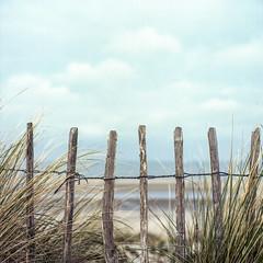 Behind the fence (Wouter de Bruijn) Tags: wood 120 6x6 film beach grass zeiss fence mediumformat square landscape coast post kodak bokeh outdoor depthoffield hasselblad squareformat portra planar 80mm 500cm 160nc portra160