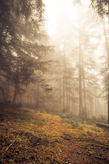 (JimiaS) Tags: morning cold tree fog forest way nikon suisse ngc trail nikkor f11 froid brouillard pola chemin fort valais matin d800 2470f28 savise