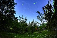 (Benzyu) Tags: firefly  startrails starrynight       sigmafisheye15mmf28