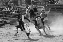 Bullfighters vs. bull (Gator Andress) Tags: cowboy horns rope bull vest cowboyhat chute bullfighters