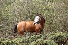 Random clicks (acharya_mr) Tags: horse animal scenary tamilnadu ooty southindia incredibleindia