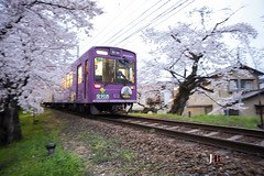 GO! Pan Pan Paning (JB ) Tags: japan train canon temple kyoto shot tram railway arashiyama  cherryblossom  sakura lightup pan panning kansai ef2470mmf28lusm tenryuji    daikakuji  randen    ef1635mmf28liiusm  5dmki 5dmkiii  ef70200mmf28lisiiusm  jb