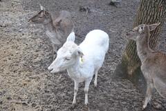 DSC_0020 (Rinswid) Tags: park nature animal spring kharkov feldman ecopark