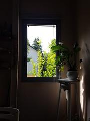 La finestra sul cortile (difii) Tags: world trees summer green window nature leaves garden eyes flickr shadows finestra myhouse sight mylife luce secretgarden mykitchen whileistudy
