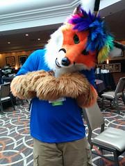 2016-04-09 17.15.48 (Morton Fox) Tags: furry va convention sheraton fursuit tysonscorner fursuiting furthemore