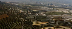 Terraces in the mist (Adrien Marc) Tags: mist field rice terrace vietnam tl mcangchai