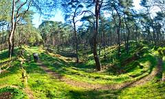 Lommel dal in zustersbos pano 2 (eddy.vanransbeeck) Tags: natuur bos heide lommel