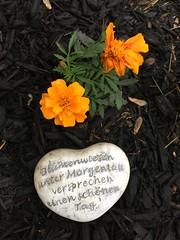 Day 119 German garden decor (Dragon Weaver) Tags: flower garden object pad german item mulch apr sentimental 2016 0428