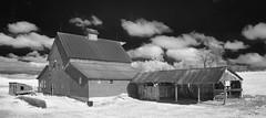 down on the farm - infrared (eDDie_TK) Tags: rural ir colorado farming barns co infrared farms berthoud redbarns rurallife larimercounty berthoudco larimercountyco