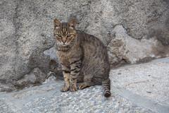 Elba Cat (Oleg.A) Tags: italy elba italia tuscany toscana isoladelba portoazzurro