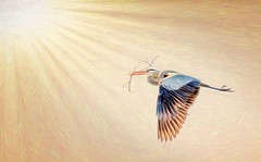 Light Turbulence (Wes Iversen) Tags: painterly nature birds photomanipulation sticks brighton michigan wildlife textures birdsinflight milford herons htt kensingtonmetropark greatblueherons tamron150600mm