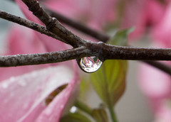 Droplet (foregorp) Tags: flowers nature water beautiful rain petals branch droplet