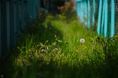 20160409-DSC_6996.jpg (d3_plus) Tags: street sea sky plant flower nature bicycle japan cycling nikon scenery outdoor daily telephoto bloom  cherryblossom  sakura tele streetphoto nikkor   kanagawa    dailyphoto   kawasaki 70210 thesedays pottering        70210mm   70210mmf4 zoomlense     70210mmf4af 702104  d700 kanagawapref  nikond700  aiafnikkor70210mmf4s 70210mmf4s