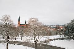 Uppsala / Sweden (ele_demina) Tags: trip travel canon spring holidays europe photos sweden swedish images baltic explore uppsala guide scandinavia oldtown stok scandic  visitsweden  visitscandinavia scandinaviaclub elenademina