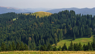 Romanian Forest