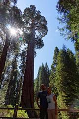 Drzewo Generała Granta | General Grant Tree