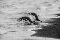 (Phil Marcus Photography) Tags: antarctica deceptionisland antarcticregion