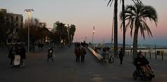 (Maria Veras) Tags: barcelona street pink sky people atardecer calle twilight gente rosa palmeras cielo barceloneta ceo crepsculo xente ambiente