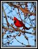 Birds around the Hacienda (Snapshots by JD) Tags: bird oklahoma dove bluejay finch sparrow cardnial