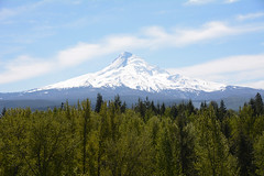 "Mount Hood • <a style=""font-size:0.8em;"" href=""http://www.flickr.com/photos/75865141@N03/24030544866/"" target=""_blank"">View on Flickr</a>"