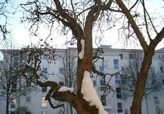 Die Tage sind so dunkel (amras_de) Tags: schnee winter snow vinter wiesbaden hiver nieve sneeuw neve invierno neige lumi inverno talvi zima sn nix kar neu sniegas sn sne snijeg snjr vetur talv sneh sneg nivi hivern kis nego snaw sniegs wanter hiems iarna zapada h sneeu negu tl snh elur ziema snieg iema nieu europaviertel vintro sneachta hibierno geimhreadh schni ivrn mmernu nu