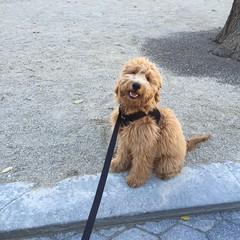 Shasta's Lenny loves going for walks in the park!
