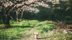 Traveler (stanley yuu) Tags: travel nature canon t eos 50mm natural taiwan 5d    carlzeiss makroplanar  danboard