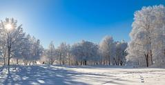 Beautiful day (mpakarlsson) Tags: park wood blue winter sky panorama sun white snow tree nature forest canon landscape frost sweden tracks 70200 skaraborg falkping msseberg 5dmarkii 5dii 5dm2 5dmark2