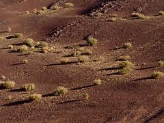 Bushes on the slope (Damien Bachmann) Tags: chile mountains landscape atacama bushes