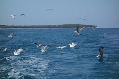 DSC03572 (winglet777) Tags: sea vacation croatia arena kanal pula hrvatska istra kroatien limski brijuni kamenjak istrien gopro hero3 sonyrx100