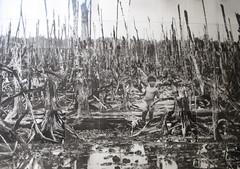 """Ho Chi Minh Ville: forêt détruite suite au largage de produits toxiques <a style=""""margin-left:10px; font-size:0.8em;"""" href=""""http://www.flickr.com/photos/127723101@N04/24373149570/"""" target=""""_blank"""">@flickr</a>"""