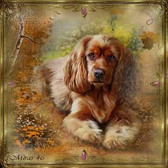 dog (miras.46) Tags: animals