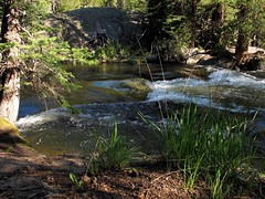 Colorado Creekside (zoniedude1) Tags: morning wild mountains nature beauty creek forest outdoors spring colorado whitewater solitude hiking rapids adventure valley backcountry outback remote rockymountains wilderness exploration discovery highwater earlysummer snowmelt eaglecounty mountainstream crosscreek whiterivernationalforest holycrosswilderness highflow zoniedude1 earthnaturelife canonpowershotg12 8800ftelevation coloradoexpedition2015 pspx8 coloradocreekside