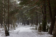 Winter road in the forest (gildor86) Tags: road trees winter snow nature forest canon landscape eos sigma poland 600d