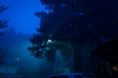 20160126-005.jpg (ctmorgan) Tags: california dublin fog streetlight unitedstates redwood filteredlight ledstreetlight