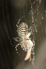 Nikki (Antonio Supertramp) Tags: naturaleza textura nature spider nikki araa nikkor aracnido supertramp telaraa nikonistas tamron70300macro naturalezacautivadora nikond5200 antoniosupertramp saltamontesmuerto