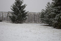 (cheldalformai) Tags: wild people italy snow nature true look cat canon happy snowflakes frozen flickr italia open val neve di non alto trentino guarda nevicata cose bello 2016 fiocchi cloz dovena