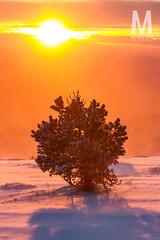 Matthieu Vitre-MtVentoux-3 (photomontagne) Tags: landscape hiver neige coucherdesoleil vaucluse ventoux montventoux